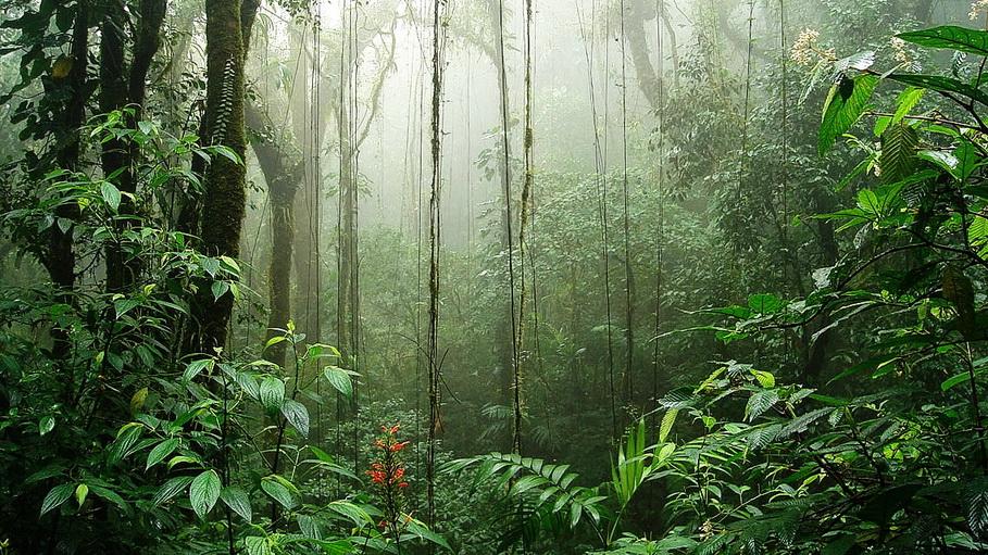 http://fotos.hellotrip.es/costa-rica/Costa_Rica_Monte_Verde_selva.jpg
