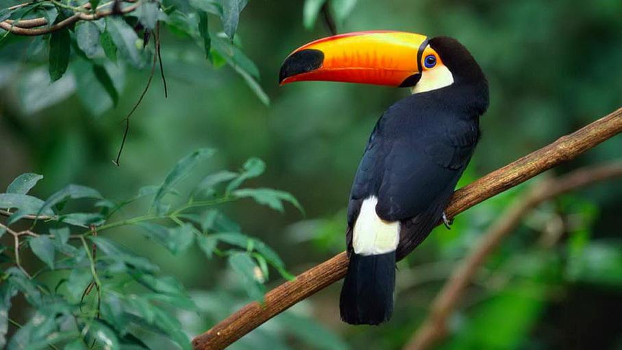 Costa Rica, pura vida en el Pacífico