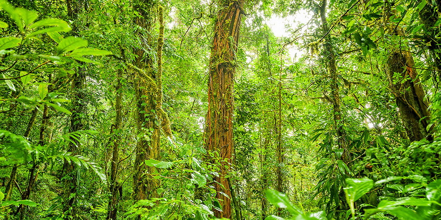 https://fotos.hellotrip.es/costa-rica/Costa_Rica_Parque_Nacional_Braulio_Carrillo.jpg