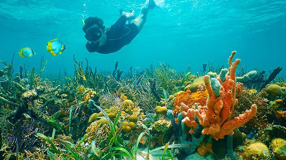 http://fotos.hellotrip.es/costa-rica/Costa_Rica_Puerto_Viejo_Parque_Nacional_Cahuita_snorkeling.jpg