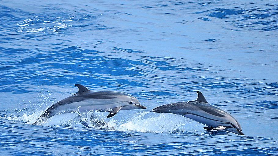 https://fotos.hellotrip.es/costa-rica/Costa_Rica_Puerto_Viejo_delfines.jpg
