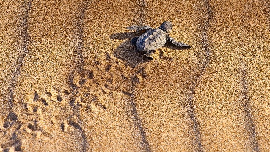 http://fotos.hellotrip.es/costa-rica/Costa_Rica_Tortuguero_Parque_Nacional_Braulio_Carrillo_playa_tortugas.jpg