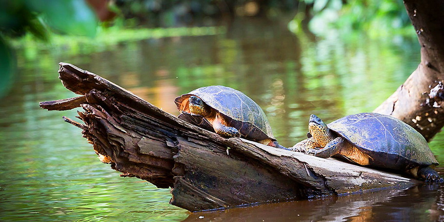 http://fotos.hellotrip.es/costa-rica/Costa_Rica_Tortuguero_canales_tortugas.jpg