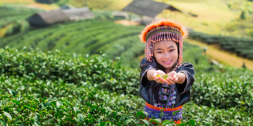 http://fotos.hellotrip.es/tailandia/Tailandia_Chiang_Mai_campos_te.jpg