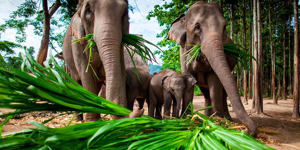 https://fotos.hellotrip.es/tailandia/Tailandia_Chiang_Mai_elefantes.jpg